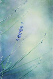 laggard by Priska  Wettstein