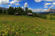Blumen und Berge von Wolfgang Dufner