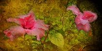 Hibiskusblüten by Mathias May