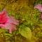 Hibiscus-pano