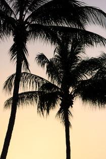 Nightfall in Paradise by Raz Shwaizer