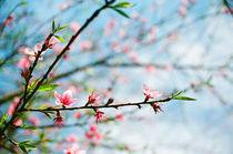 Spring comes by Kien Le