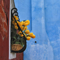 Tulips in Burano