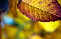 Autumn Colors von Amos Edana