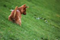 Dog I by gokinka