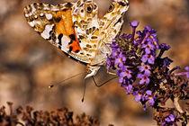 Schmetterling von Peter Ortmann
