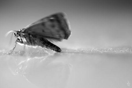 Butterfly-f