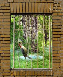 Paradise-locked-up
