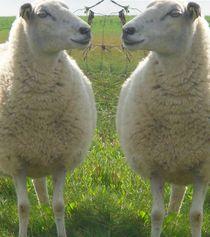 Zwillinge von Peter Norden