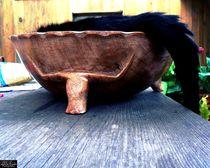 Cat in a Fruit Bowl by Chloe Birds