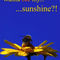 Wanna-bee-my-sunshine-artflakes