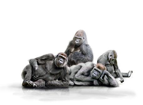 Affenbande-verk