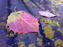 Autumn leaf von Admir Idrizi
