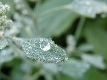 Dew drop by Admir Idrizi