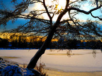 Sunny Freeze von Andrea Capano
