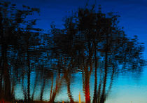 Trees in the blue by Andrea Capano