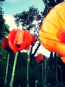 Poppy von Emilia Mocan