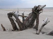 Strandgut - Treibholz-2 von Marion Hermanns