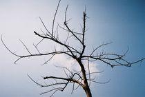 Reach For The Sky von travisfeldmanphotography