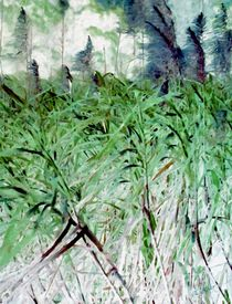 Bambustraum by Eckhard Röder