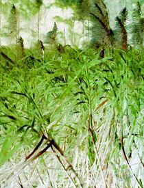 Bambus by Eckhard Röder