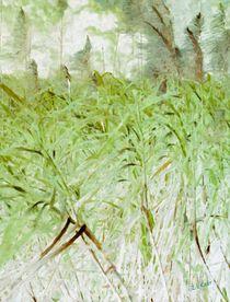 Ein hauch von Bambus by Eckhard Röder