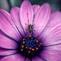 grassyhopper von Isabella Bauer