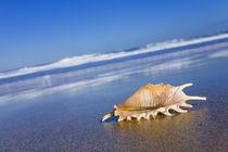 Seashell von Alex Bramwell