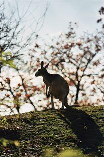 kangaroo by Anastasia Agafonova