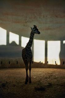 giraffe by Anastasia Agafonova