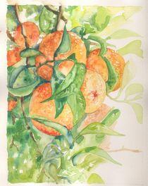 oranges by ana-jacob