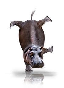 Happy-hippo-verk