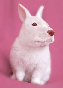 Rabbitog von Diego Marcondes