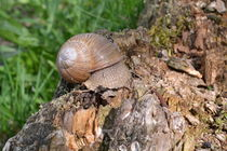 Snail-by-ektrom-d3gbbcb
