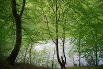 Secret lake by Lina Shidlovskaya