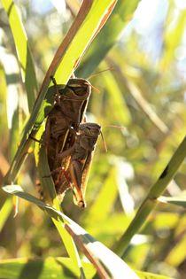 hiding love in grass  von Nadine Amende