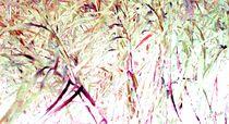 Farbträumereien mit Bambus by Eckhard Röder