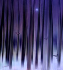 Mystic Forest von Eckhard Röder