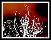 Touching the sky von Alejandro Campos
