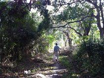 Walking Away von Angely Tiburcio