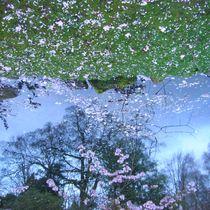 Pink Petals by Katrine Bengtsson