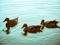 Lets swim together. von Yevheniya Pashnina