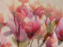 Blühende Magnolie von Gabriele Köder - Bercher