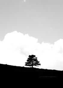 Solitary by cjwesselsphotography