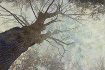 Branching by Helen K. Passey