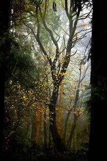 Gold Confetti von Helen K. Passey