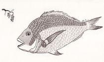 Fish by Alan Junior