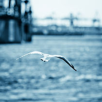 sea gull by Philipp Kayser