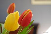 Tulpen-001