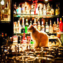 cat(ches rats) in a bar by Philipp Kayser